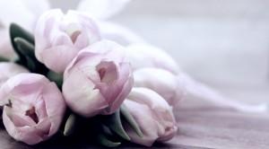 Aphrodisierende Kräuter - 5 Anwendungstipps
