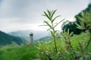Was dir deine Seelenpflanze sagen will